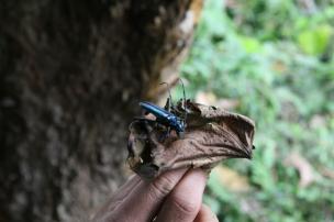 bug in the jungle