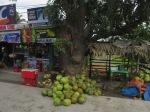 roadside coconuts