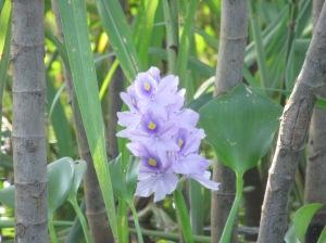beautiful amazon flowers