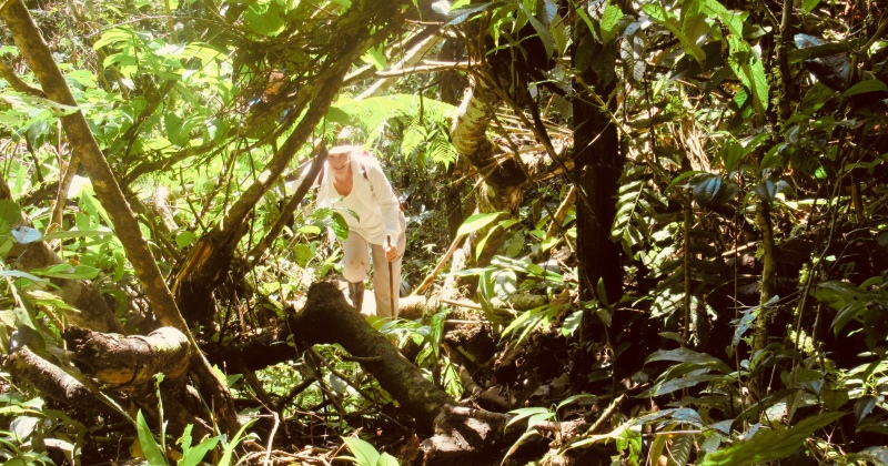 exploring the columbian amazon jungle