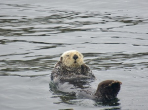 an otter from out boat trip